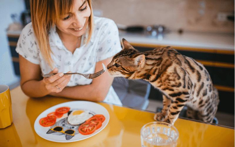 ベンガル 猫