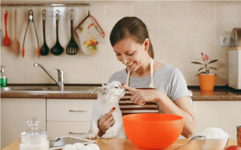 キッチン 猫