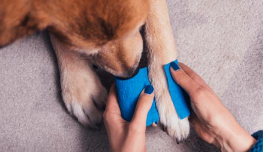 犬の脱臼は適切な対処が必要!部位別の原因や治療法などを徹底解説!