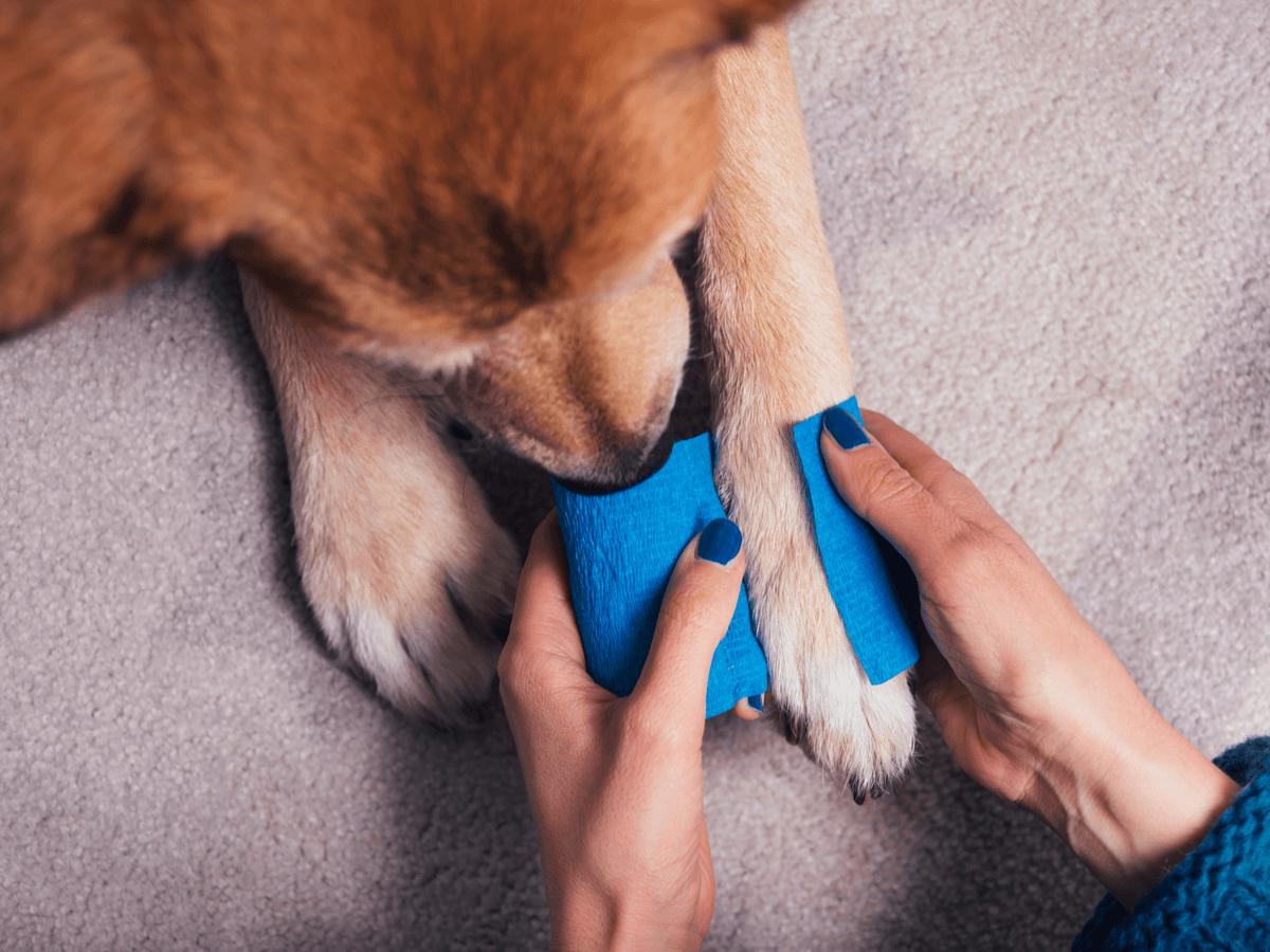 犬 包帯 脱臼 ケガ
