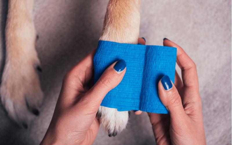 犬の骨折、症状や原因は?正しく対処して愛犬を守ろう