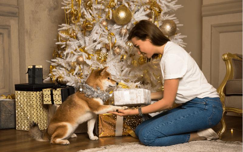 愛犬へのクリスマスプレゼント