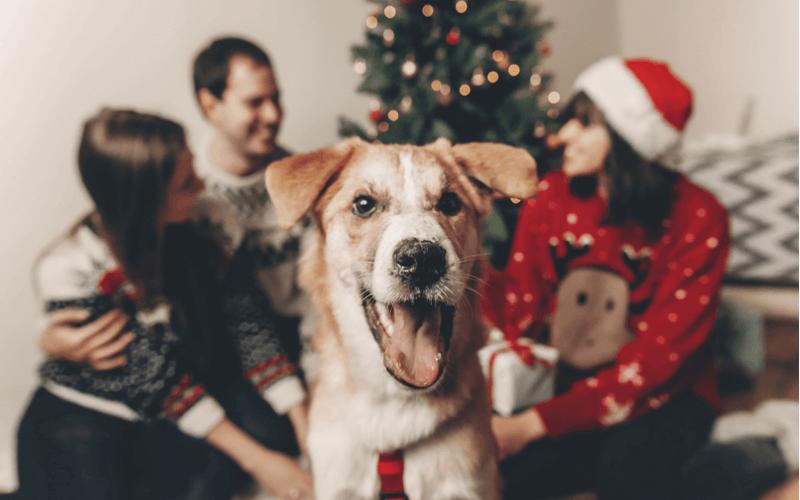 愛犬が喜ぶクリスマスプレゼント