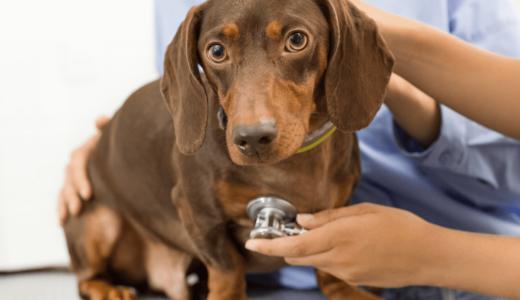 犬の打撲の処置・治療法は?腫れや内出血症状や未然に防ぐ対策を解説