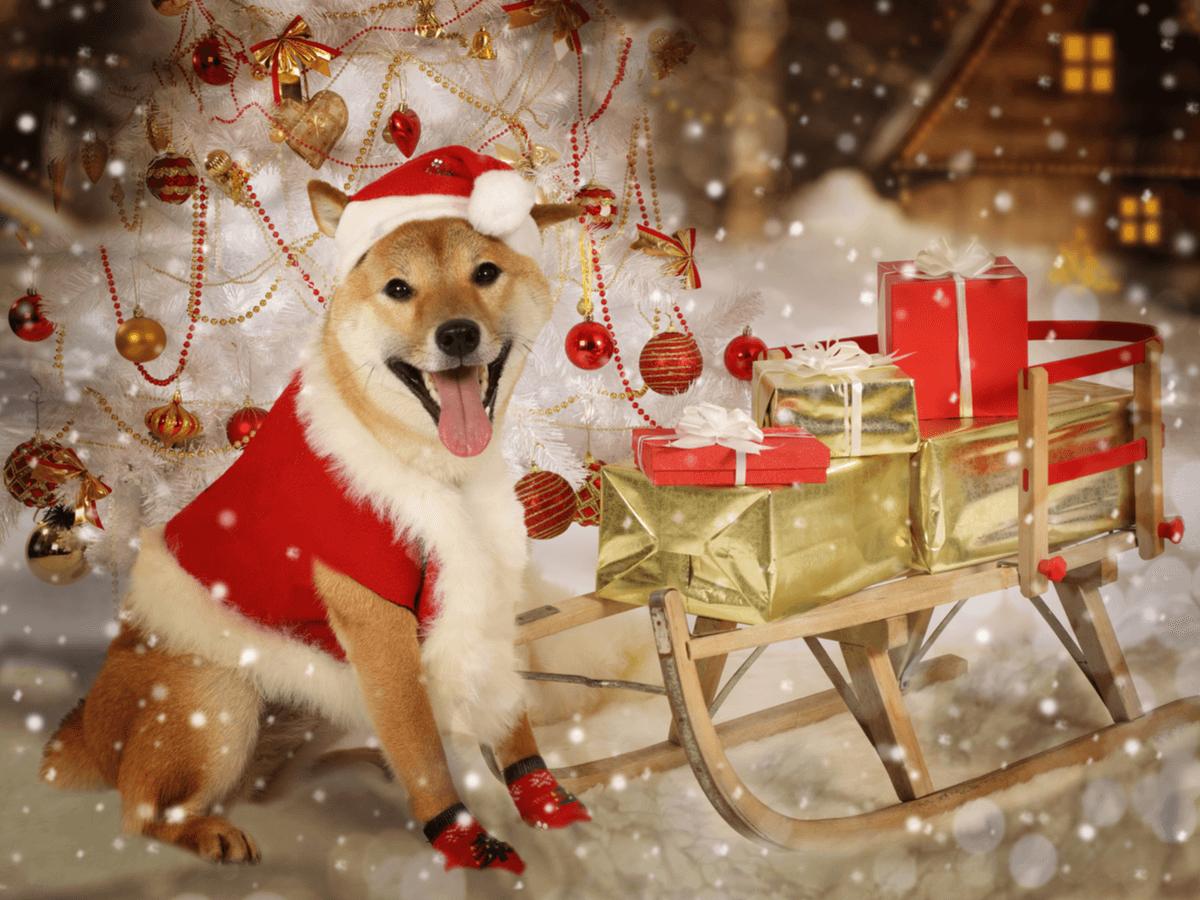 犬のクリスマス服