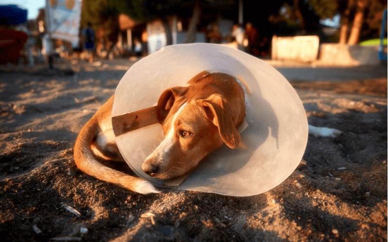 犬がマウンティングするのはなぜ?理由を知って適切に対処しよう