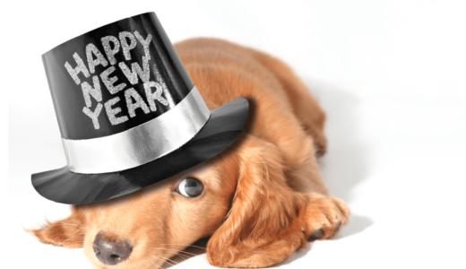 犬が主役の年賀状を手作りしよう!人気のおしゃれデザインやおすすめアイデア6つをご紹介
