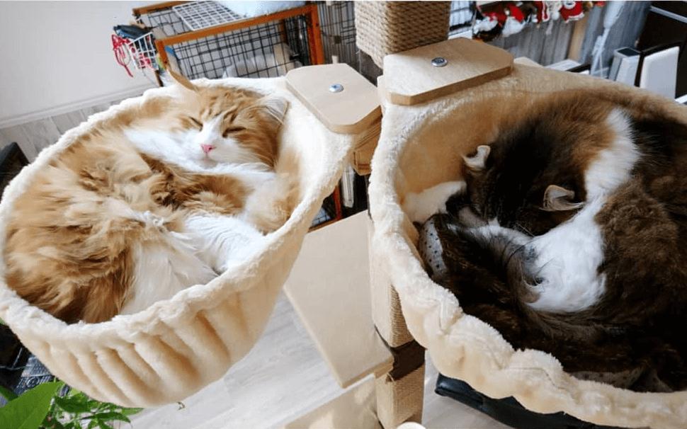 愛猫におすすめのハンモック6選