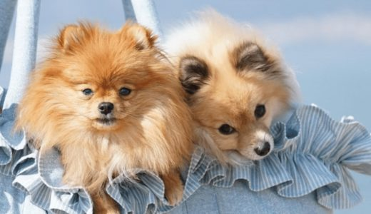 犬用バッグはどう選ぶ?おすすめ商品3選と使用時の注意点を紹介