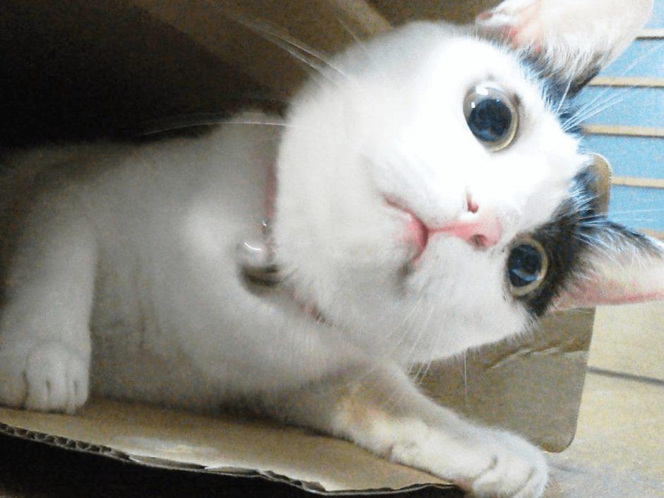 ダンボール 猫