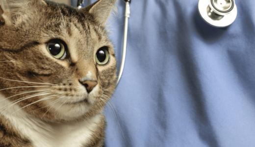 猫の保険選びのポイントは?6つのおすすめ会社一覧を参考に備えておこう