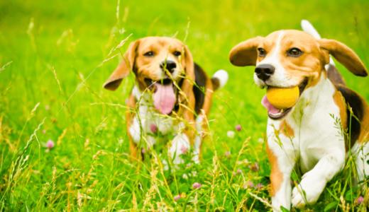 中型犬の種類が知りたい方必見!人気の犬種や飼いやすさもチェックしてみよう