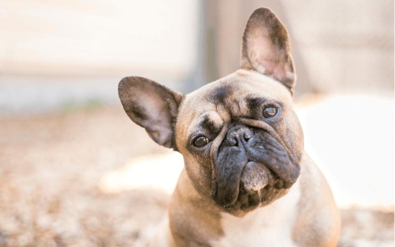中型犬 種類