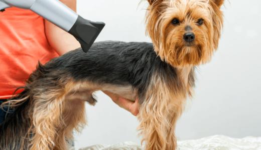 犬専用のドライヤー10選!ストレスを与えないように静かなものを使用しよう