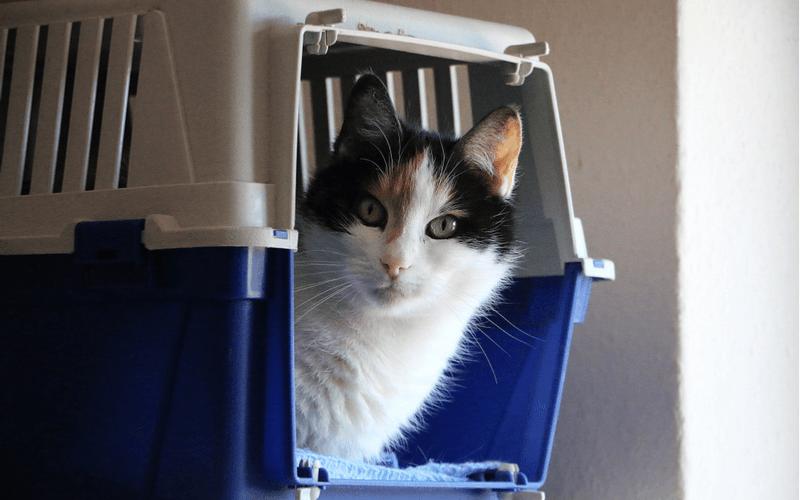 猫 ドライヤー