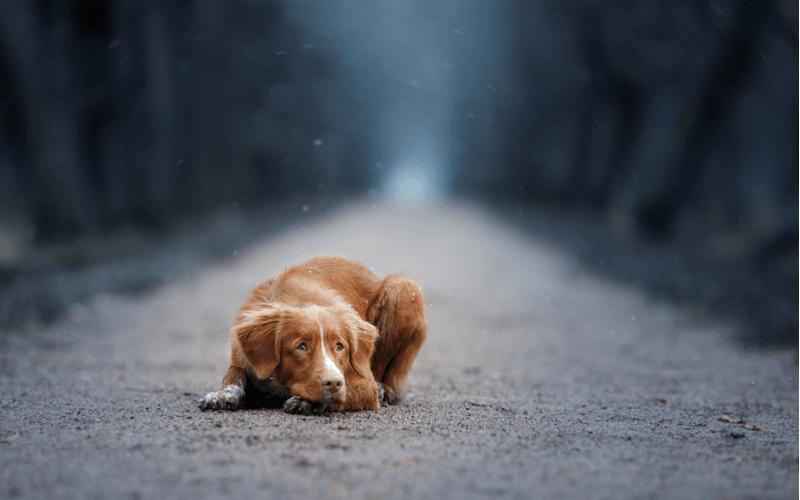 犬 マイクロチップ