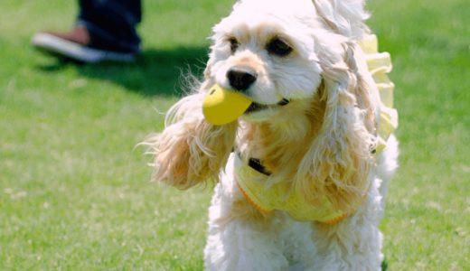犬のおもちゃはボールがおすすめ!一緒に遊べる人気商品8選