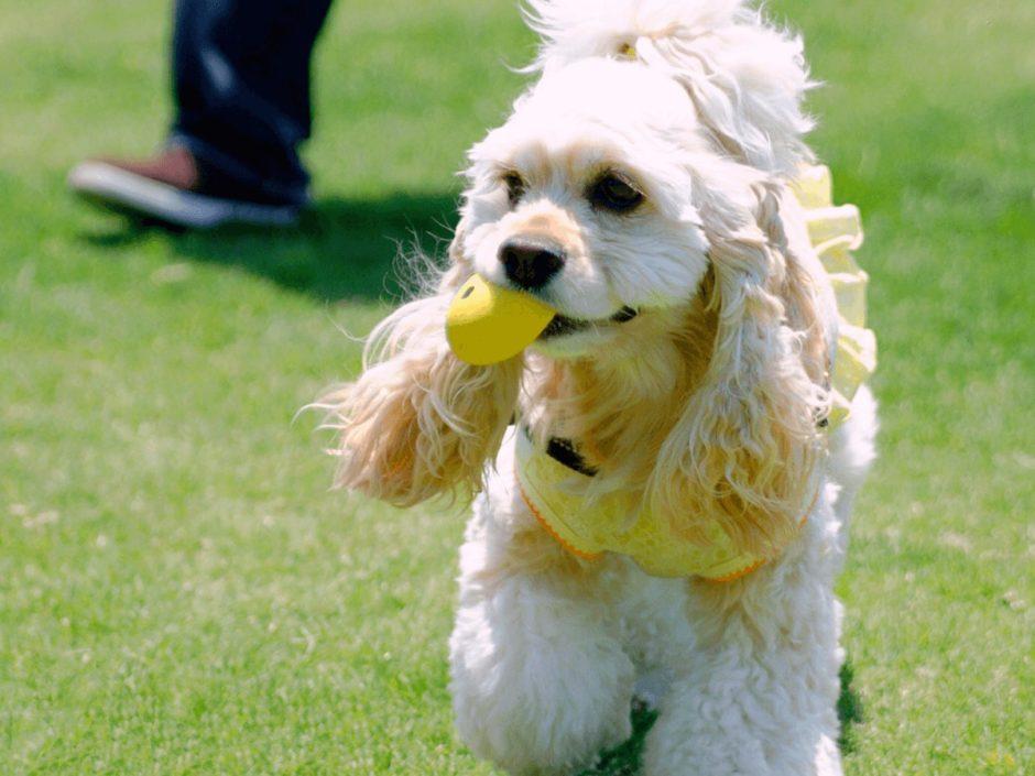 犬 おもちゃ ボール