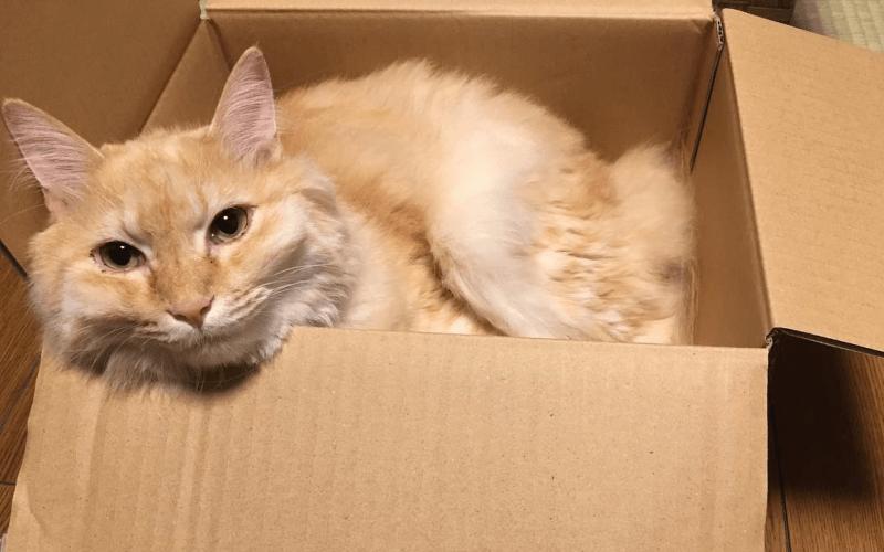 猫 ダンボール