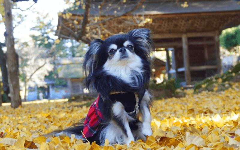 小型犬 種類