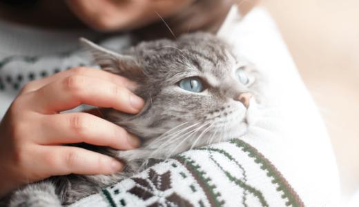 関心が高まる猫のマイクロチップとは?災害時に愛猫が戻ってくる確率アップ?