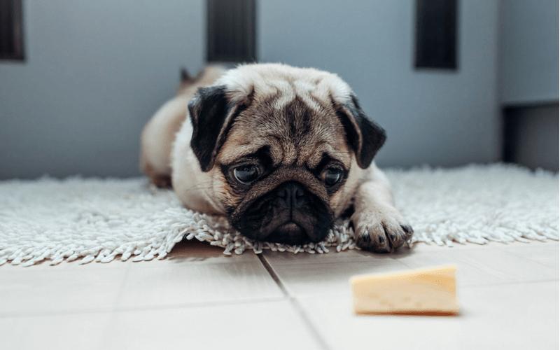 犬 チーズ