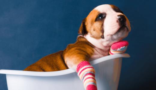 愛犬が靴下を嫌がるのはどうして?編集部おすすめの靴下4選や手作りの方法をご紹介