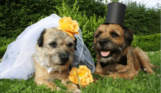 犬同士で結婚式を挙げられる施設3選!思い出作りに幸せな空間を作ってあげよう