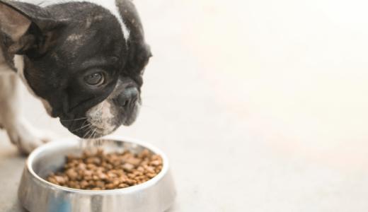 シニア犬のドッグフードはどう選ぶ?切り替えのタイミングとおすすめ商品6選をご紹介