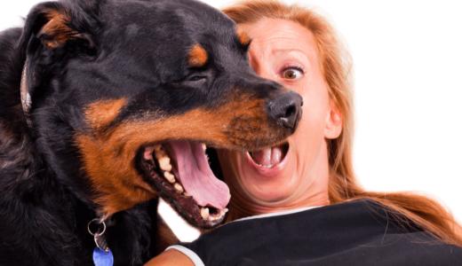 犬の口臭はスプレーで対策できる?毎日手軽に使えるおすすめ商品5選