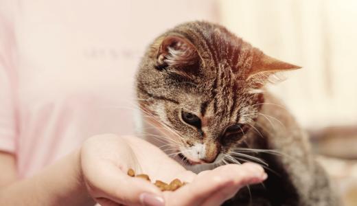 子猫の餌をドライフードにしたい!切り替えのポイントとおすすめ商品5選