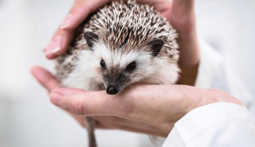 ハリネズミが治療を受けられる動物病院49選!全国各地の医療機関をご紹介