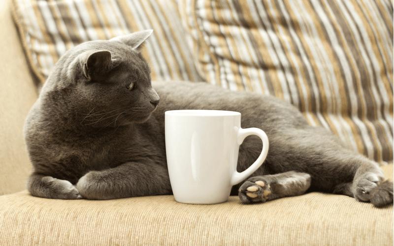 猫 コーヒー