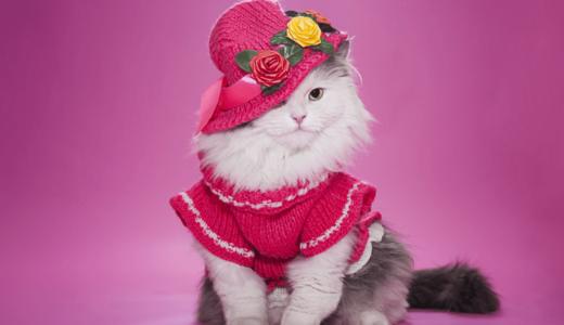 愛猫とドレスアップしてイベントを楽しもう!