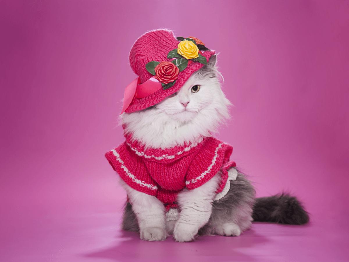 猫 ドレス