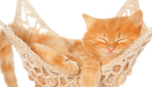 猫はハンモックが好き!?愛猫におすすめのハンモック6選と作り方