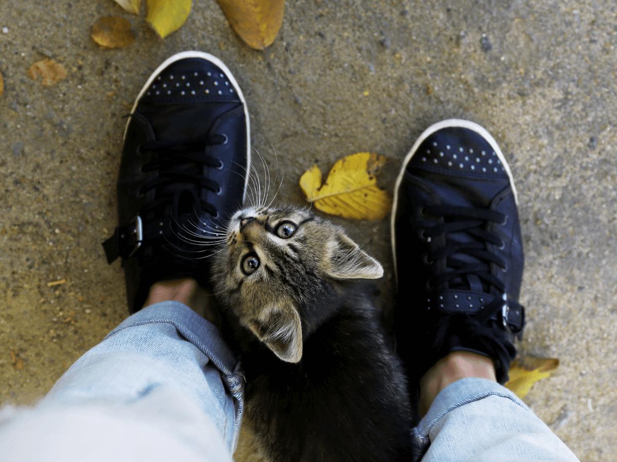 猫 ついてくる