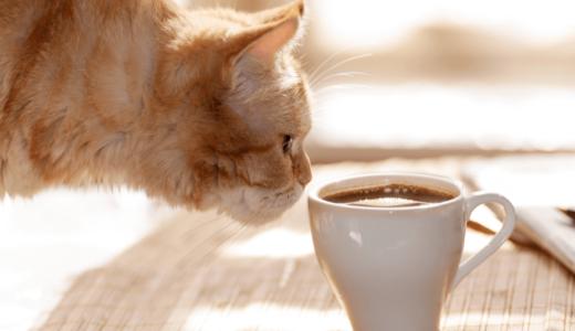 猫がコーヒーを飲むのは危険!飲ませないための対策4選と猫と高級コーヒーの面白い関係についてもご紹介