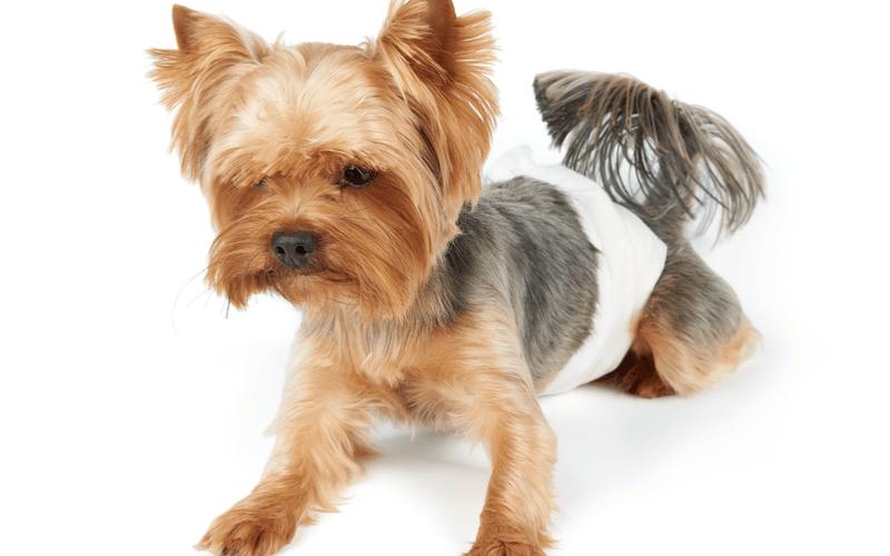 犬 オムツ