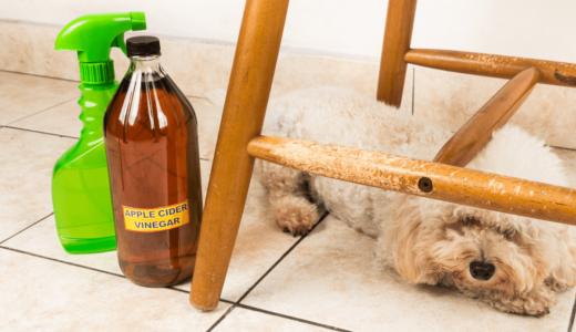 ペットの消臭剤選びのポイントは?ニオイ対策におすすめの商品を形状別にご紹介