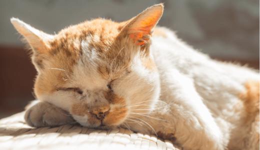 老猫と暮らすときに知っておきたい5つのこと!ご飯を食べなかったり便秘気味になるのは理由がある