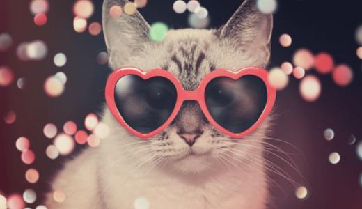 猫のイベントにはどんなものがある?東京や関西で開催されているおすすめの猫イベントを紹介!