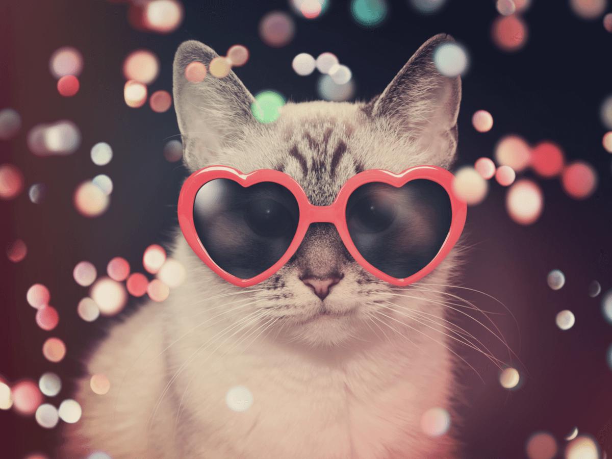 猫 イベント