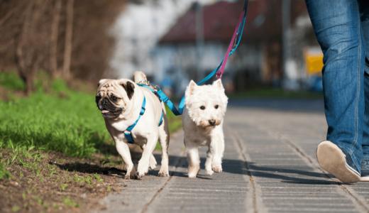 犬がレンタルできる全国店舗おすすめ19選!一緒に散歩も体験してみよう
