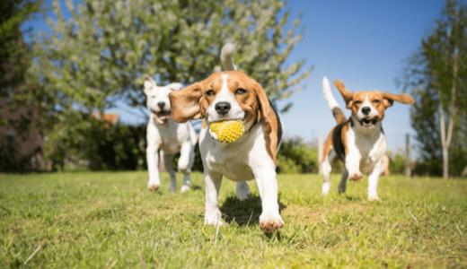 休日はペットとたっぷり遊ぼう!九州でおすすめのペットと遊べる公園
