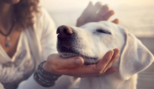 犬のため息からわかる感情のサインとは?病気の可能性がある場合も