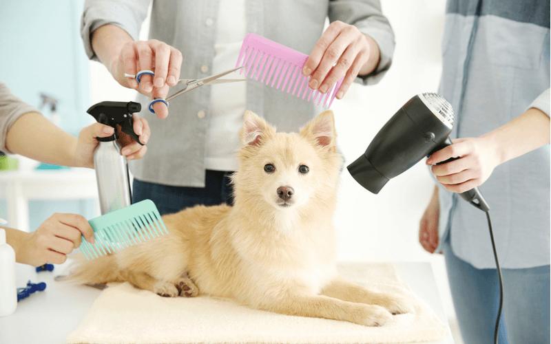 犬 グルーミング
