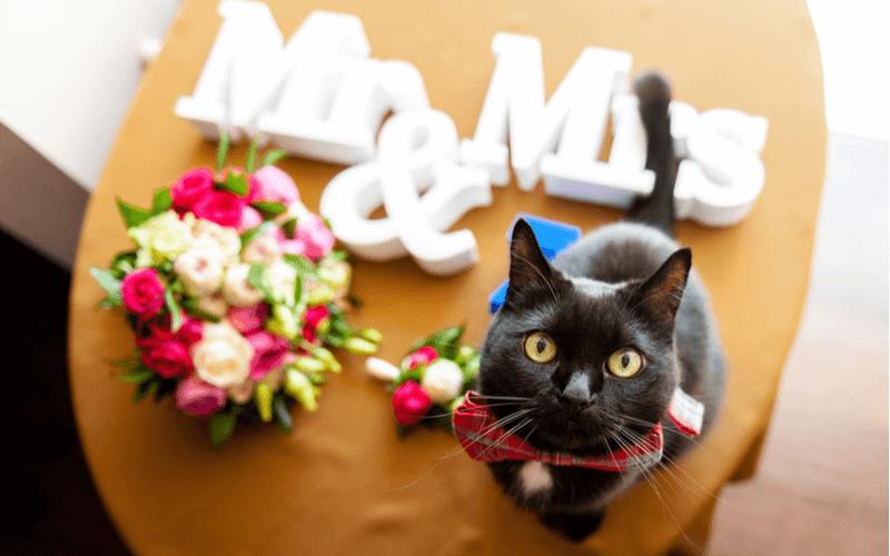猫 結婚式