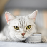 猫 キャットフード 缶