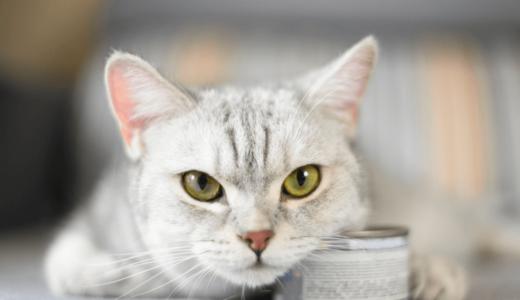キャットフードの缶詰タイプの特徴は?猫に与えるメリット・デメリットとおすすめ商品5選